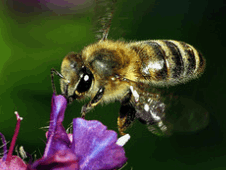 Bestbeekeeping blog