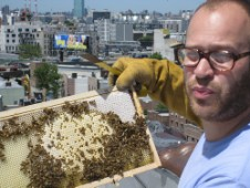 Rooftop beekeeping in Brookyln, New York